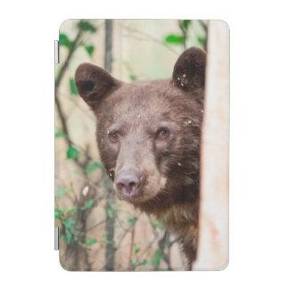 Juvenile Black Bear Portrait, Missoula, Montana iPad Mini Cover
