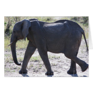 Juvenile Elephant Card