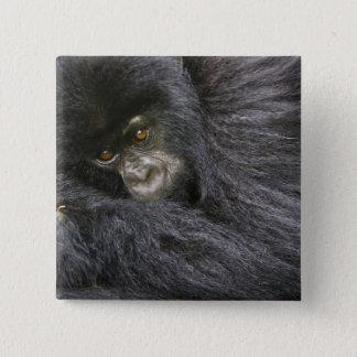 Juvenile Mountain Gorilla 3 2 Inch Square Button