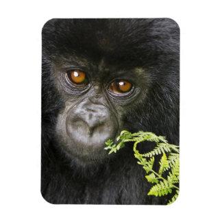 Juvenile Mountain Gorilla Magnet