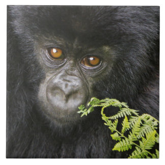 Juvenile Mountain Gorilla Tile