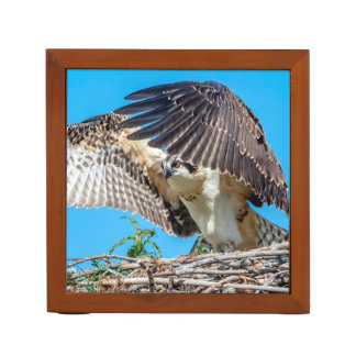 Juvenile Osprey in the nest Desk Organizer