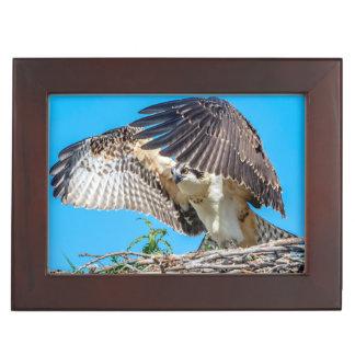 Juvenile Osprey in the nest Keepsake Box
