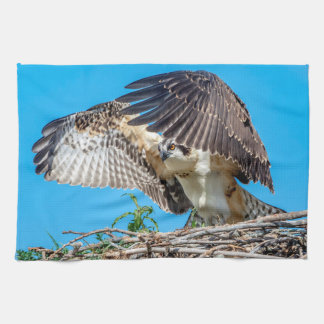 Juvenile Osprey in the nest Kitchen Towel