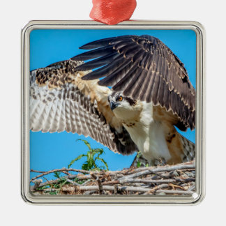 Juvenile Osprey in the nest Metal Ornament