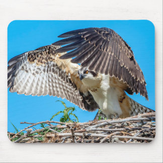 Juvenile Osprey in the nest Mouse Pad