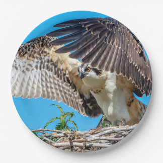 Juvenile Osprey in the nest Paper Plate
