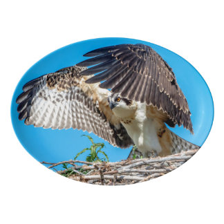 Juvenile Osprey in the nest Porcelain Serving Platter