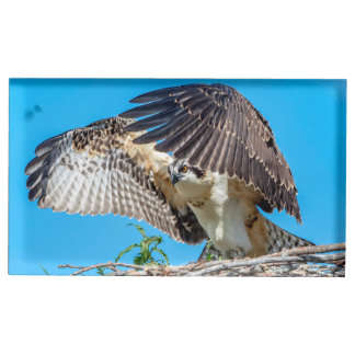 Juvenile Osprey in the nest Table Number Holder
