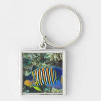 Juvenile Regal Angelfish Pygoplites Silver-Colored Square Keychain