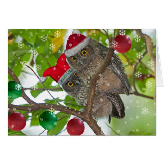 Juvenile Western Screech Owls Christmas Card