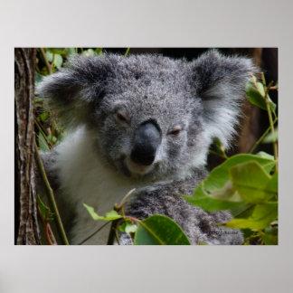 k for koala poster
