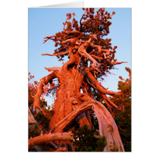 Kachina Tree Card