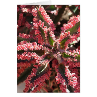 Kalanchoe 'Butterfly Wings' notecard