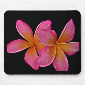 Kaneohe Sunburst Plumeria Mouse Pad