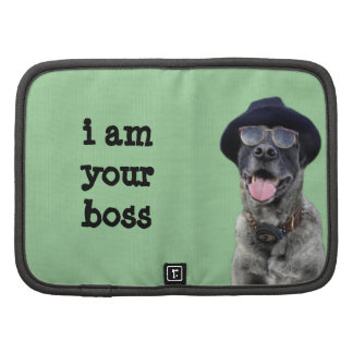 kangal hund mit hut und brille mappe