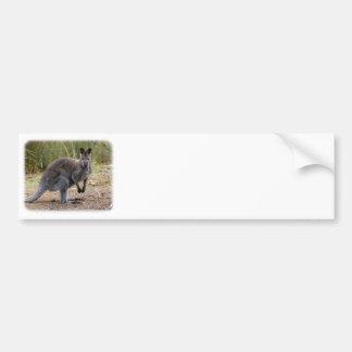 Kangaroo 9Y344D-186 Bumper Sticker