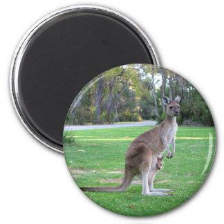 Kangaroo and Joey Magnet