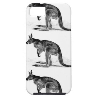 kangaroo boxed in square iPhone 5 case