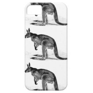 kangaroo boxed in square iPhone 5 cover