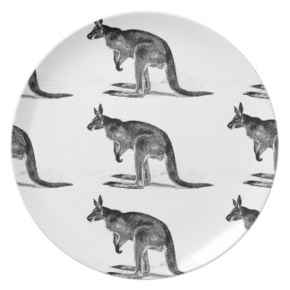kangaroo boxed in square plate