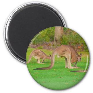 kangaroo fam magnet