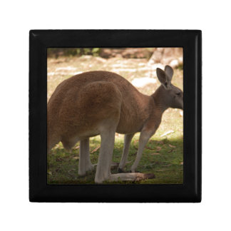 Kangaroo Gift Box