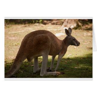 Kangaroo greetings card (blank)