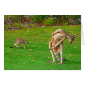 kangaroo & joey card