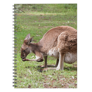 Kangaroo, Outback Australia Notebook