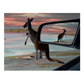 Kangaroo_Sea_Breezes,_ Postcard