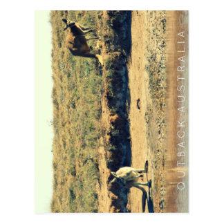 Kangoroo australien carte postale