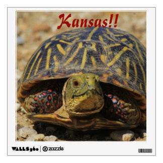 Kansas Box Shell Turtle Wall Square Wall Decal
