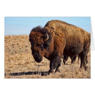Kansas Buffalo Card
