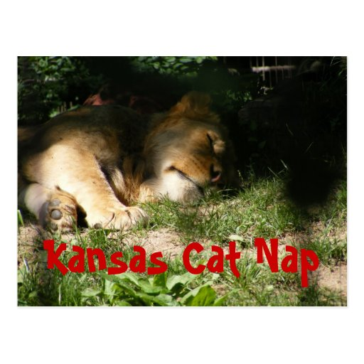 Kansas Cat Nap Postcard
