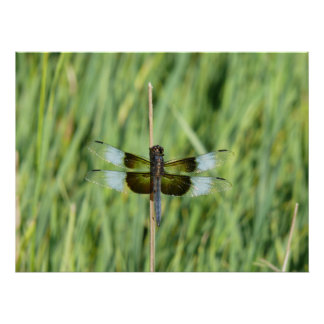 Kansas Dragonfly Print