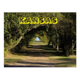 Kansas Drive Way with trees, Postcard