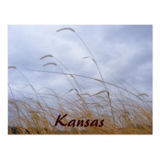 Kansas Grass and Cloudy Sky Postcard