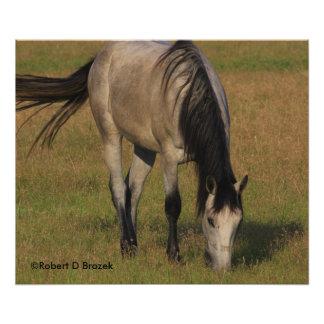 Kansas Horse in a Pasture Photo Art