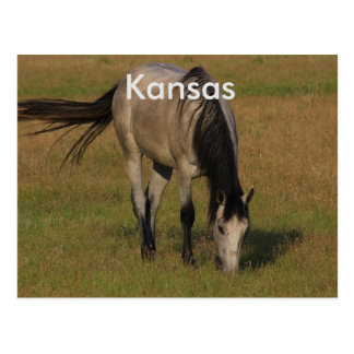 Kansas Horse in a Pasture POST CARD