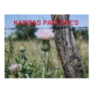 KANSAS PASTURE'S Post Card