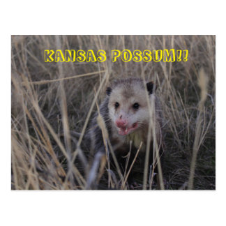 Kansas Possum Post Card. Postcard