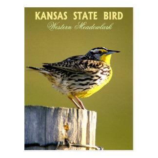 Kansas State Bird - Western Meadowlark Postcard