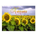 Kansas State Flower - The Sunflower Postcards