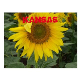 Kansas Sunflower in a Field Post Card