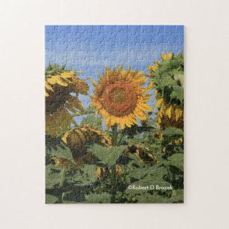 Kansas Sunflowers PUZZLE