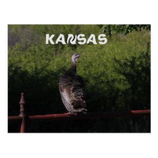 Kansas Turkey on a Fence Post Card