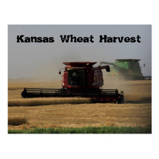 Kansas Wheat Harvest Post Card