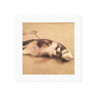 Kasie Cat Laying Down Canvas Print