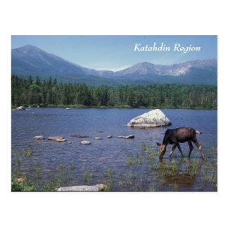 Katahdin Region Maine Moose Postcard